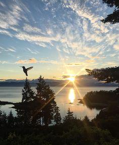 [OC] Hummingbird at Sunrise- Nanaimo BC [2701  3277] -Please check the website for more pics