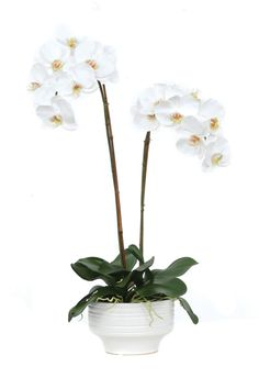 White Phal Pot Silk Botanicals-The White Phal Pot is designed by Luxury Silk Botanical. With more than 40 years of experience, each silk botanical is hand crafted from the finest materials for quality and botanical accuracy. Green Flowers, Faux Flowers, Silk Flowers, Faux Flower Arrangements, Saintpaulia, White Orchids, Fabric Online, Cut And Style, Street Art