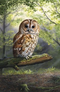 'Woodland Refuge' - Limited Edition Owl Print by Nigel Artingstall. Owl Photos, Owl Pictures, British Wildlife, Wildlife Art, Owl Graphic, Owl Bags, Beautiful Owl, Animal Totems, Bird Drawings