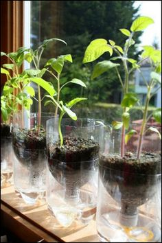 Start your own garden with these self-watering seed starter pots. Learn how they're made!