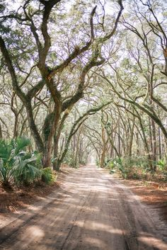 Gal Meets Glam Palmetto Bluff - Looks like a painting!