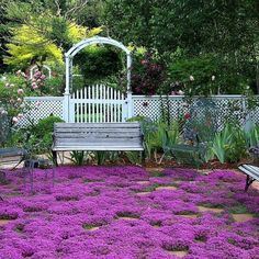 Creeping Thyme ground cover 1000 seeds fragrant herb pink blooms perennial zones 4 to 9 sun or light shade deerproof Thymus serpyllum Garden Paths, Garden Landscaping, Garden Borders, Landscaping Ideas, Arizona Landscaping, Shade Landscaping, Sun Garden, Terrace Garden, Thymus Serpyllum