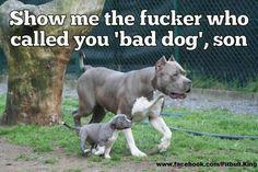 HondenForum: Gewoon leuke honden fotos