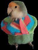 Een kraagjes voor de plukkers of vogels met wonden. Natuurlijk eerst vogel- of dierenarts raadplegen. Drokkies.nl Parrot, Bird, Animals, Parrot Bird, Animales, Animaux, Birds, Animal, Animais