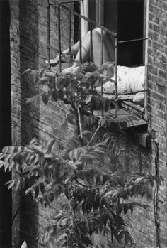 Andre Kertesz, Watching From Above