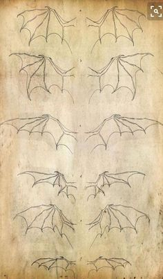 Different kind of wings - best used for a bat or dragon - drawing reference Art Reference Poses, Design Reference, Drawing Reference, Anatomy Reference, Dragon Sketch, Dragon Drawings, Bat Sketch, Wings Sketch, Wings Drawing