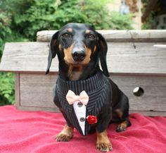Pinstripe Wedding Dog Bandana Suit Sz XS S M. $14.99, via Etsy.