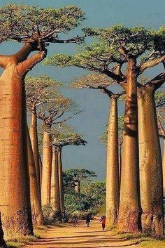 Madagascar, The Amazing Isolated Island