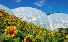 Eden Project in Cornwall - fantastic outing for all the family.