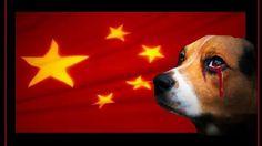 Abaixo-assinado · Presidente da República Popular da China: Parem o Festival de Carne de Cachorro de Yulin · Change.org