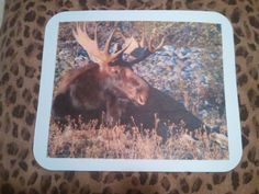 Mouse Pad  Moose by WildlandCreations on Etsy, $6.50