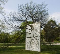 'Wall in Blue Ash Tree'   by Letha Wilson, 2011.