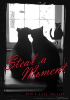 Steal a Moment Black Cats Valentine