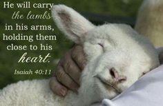 Scripture - Psalm 23 - Day 1 - Psalm 23 Love and Loss Scripture Verses, Bible Verses Quotes, Bible Scriptures, Lord Is My Shepherd, The Good Shepherd, Jesus Shepherd, Baby Animals, Cute Animals, Vida Animal