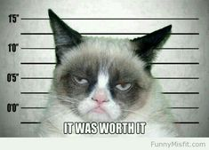 grumpy cat humor funny meme joke - Tap the link now to see all of our cool cat collections!