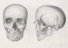 human ritual skull - Google Search