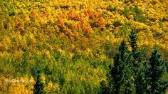 Have you seen the spectacular warm colorado autumn colors? - Denver Real Estate