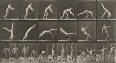 Eadweard J. Muybridge. Head-spring, a Flying Pigeon Interfering: Plate 365 from Animal Locomotion (1887. 1884-86)