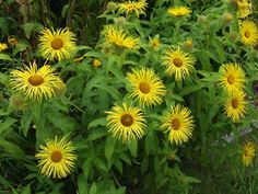 Photo by Palustris Katz Planting, Gardening, Annual Plants, Cool Plants, Perennials, Tropical, Yellow, Flowers, Image