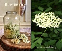 Edible Plants, Glass Vase, Health, Decor, Recipes, Syrup, Decoration, Health Care, Recipies