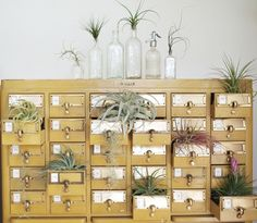 I love library card catalogs.  And if I could keep plants alive and didn't want to fill every drawer with Sharpies and Monopoly money, this idea would be amazing.