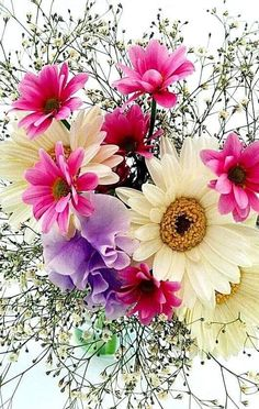 Enjoy World Fragrance of Flowers Amazing Flowers, Beautiful Roses, Colorful Flowers, Beautiful Flowers, Bulb Flowers, Flowers Nature, Birthday Wishes Flowers, Amaryllis Bulbs, Good Morning Flowers