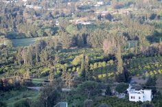 My House Bodrum etrafındaki portakal bahçeleri