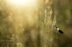 Morning Calo by donlope #nature #photooftheday #amazing #picoftheday