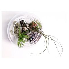Morning Monday! I'm excited to be sending out one of these large fishbowl terrariums with 3 air plants today. I  choosing the perfect plants!