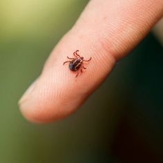 Tick Safety Tips #camping #summerfun