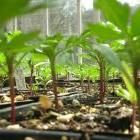 How to Start from Seeds: Organic Gardening