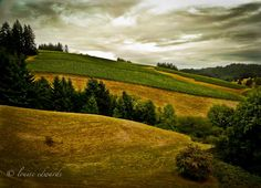 """Photo of the Day - June 27, 2012.'Wine Country"""", Willakenzie Estates Winery, Willamette Valley, Dundee, Oregon. Copyrights belong to the photographer: Louise Edwards."""