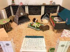 Cute little pen idea for guinea pigs I love the colors Indoor Guinea Pig Cage, Guinea Pig House, Indoor Rabbit, Pet Guinea Pigs, Bunny Cages, Hamster Cages, Rabbit Cages, Pig Information, Rabbit Habitat