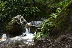 Where can you gohiking in California? Mount Diablo has some amazing trails. I recommend the Falls Trail at Mount Diablo in the Bay Area in the Spring.