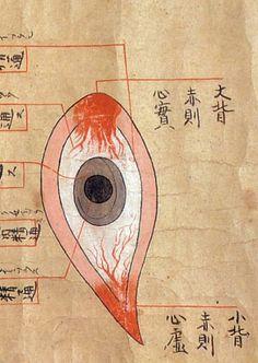 Edo-period medical illustration -- Anatomical illustrations, late 17th century [+]