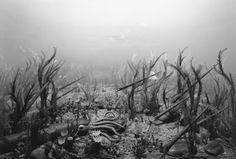 Hiroshi Sugimoto: Ordovician Period (1992) - ?