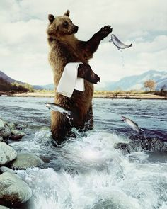 35 Amazing Funny Photo Manipulations and Creative Pictures Funny Photos, Cool Photos, Guerilla Marketing, Creative Pictures, Water Photography, Advertising Photography, Print Advertising, Black Bear, Photo Manipulation