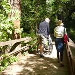 Photo of a couple walking with a friend in a wheelchair at Muir, Woods, California
