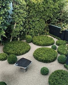 Out of the box idea: pools of buxus in gravel. Japanese theme