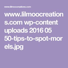 www.lilmoocreations.com wp-content uploads 2016 05 50-tips-to-spot-morels.jpg