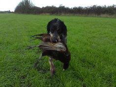 Demi-journée de chasse, j'offre : http://www.web-commercant.fr/cheques/loisirs/monsac-24440/les-oiseaux-de-monsac/567-demi-journee-de-chasse