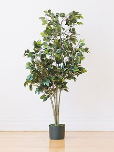 Tall House Plants Low Light five great apartment plants (require low light, are low mainteance