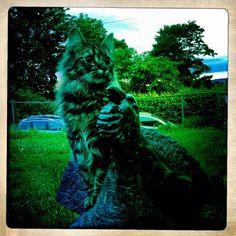 Katt på Orrfugl Katt, Lion Sculpture, Photos, Pictures, Statue, Photo Illustration, Sculpture, Drawings, Sculptures