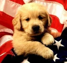 Check out these #patriotic #pups!