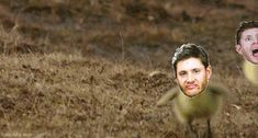 Jensen Quackles - Imgur. Because this fandom is completely nutter-butters.