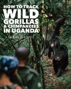 Travel Guides, Travel Tips, Gorilla Trekking, Uganda Travel, List Of Activities, Paradise Found, Destinations, Tour Operator, Photo Diary