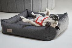 11 Meilleures Images Du Tableau Panier Design Pour Chiens Dog Cat