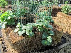 Central Virginia Organic Gardener: Straw-Bale Gardening...interesting idea