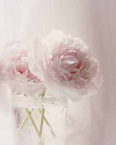 CIJ Sale 20% Off Pale Pink Flower Photograph - pink peony vase white light pastel home decor 8x10