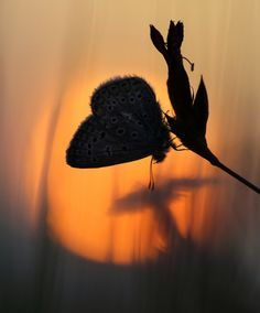 ☀beautiful butterfly :)